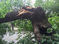 От грозы упало дерево