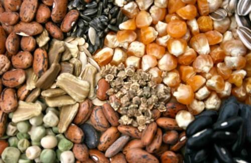 Что собой представляет подготовка семян к посеву?