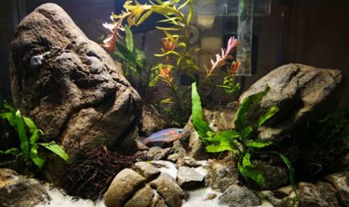 Особенности ухода за домашним аквариумом