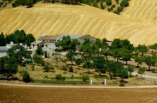 Условия коммерческой аренды земли
